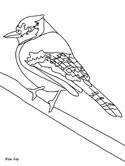 bluejay coloring page