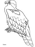 osprey coloring pages