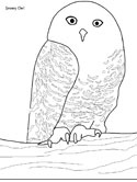 Canadian birds coloring page