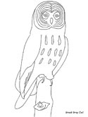 great grey owl coloring page
