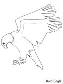 mammals of Russia - eagle coloring pages