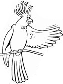 cockatiel coloring page