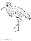 European White Stork coloring page