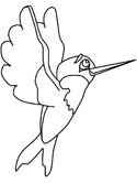 hummingbird coloring page