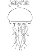 labelled jellyfish coloring page - Jellyfish Coloring Pages