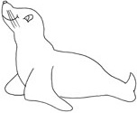 Seals Coloring Book Pages