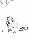 beaver coloring book pages