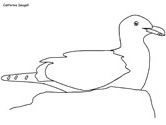 California Seagull coloring page