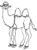 Camel Coloring Pages Coloring Pages Camel