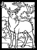 Denmark mammals - red and roe deer coloring page