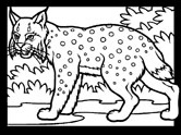 mammals of Norway: lynx coloring pages