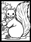Squirrels Coloring Pages
