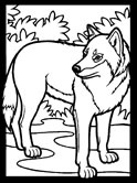 mammals of Poland: wolf coloring page