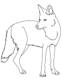 coyote coloring page
