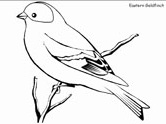 Realistic Birds Coloring Pages