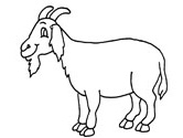 Goat Coloring Pages 5f5959128