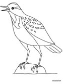 Meadowlark coloring page