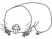 Mammals of Hungary: mole rat coloring page