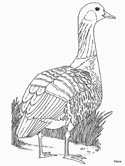 nene coloring page