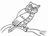 owl coloring book page