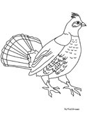 Grouse Coloring Pages