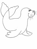 mammals of Russia - seal coloring pages