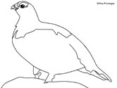 Inuit animals: Willow Ptarmigan coloring book page