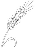 Russian crops - rye coloring pages