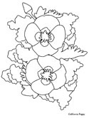 California Poppy coloring page