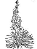 Yucca coloring page