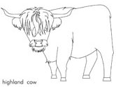 highland cattle coloring pages